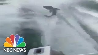 Police Charge Men With Animal Cruelty After Shark Dragging Video | NBC News