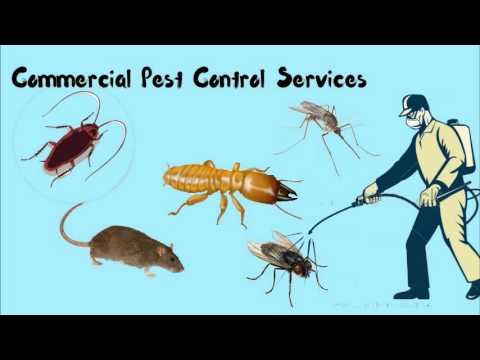 Modern Pest Control Service
