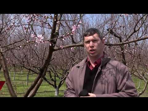 linvideozp: Весенняя обработка сада Херсонщина
