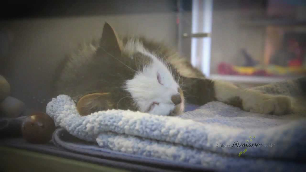 Calgary Dog Cat Shelter ~ Calgary Humane Society Video - non-profit animals  pet adoption