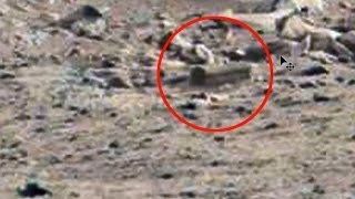 Video Proof of Life on Mars Found in NASA Photos? download MP3, 3GP, MP4, WEBM, AVI, FLV Agustus 2017