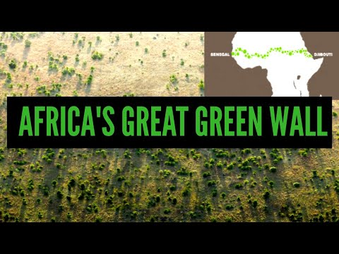 Why is Africa Building a Great Green Wall? | African Biographics