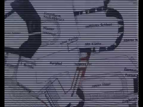 Jakobs-Greiskraut: Wichtiges Indiz entdeckt