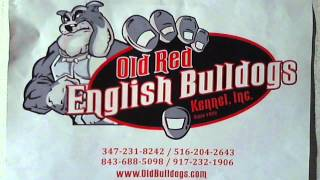 Real Deal Old Red English Bulldogs Kennel Inc Still Here