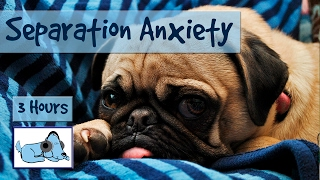 Repeat youtube video Over THREE Hours of Relaxation for Dogs with Separation Anxiety! Calm Your Dog While You're Away