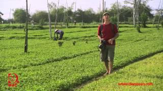 [Tập 19] Phú Yên - Vẻ đẹp hoang sơ của biển - Khám phá Việt Nam cùng Robert Danhi