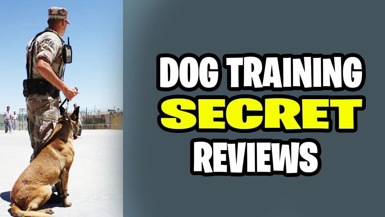 Dog Training Secret Reviews 7 Dog Training Hidden Truth You Should Know Anthony Louis Youtube