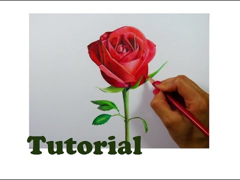 C mo dibujar una rosa how to draw a rose youtube - Como secar una rosa ...