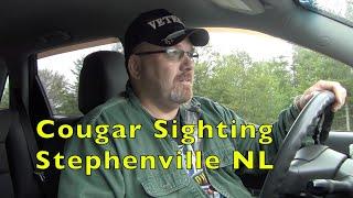 COUGAR SIGHTING STEPHENVILLE NEWFOUNDLAND 10 SEP 2019