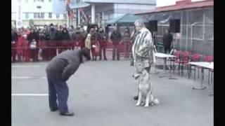 Wolf and Dog - ВОЛЭНД, рассказ о породе
