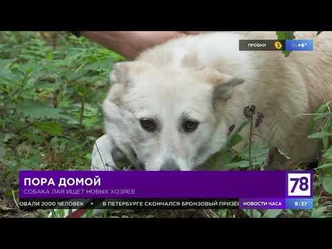 """Рубрика """"Пора домой"""" в """"Полезном утре"""""""