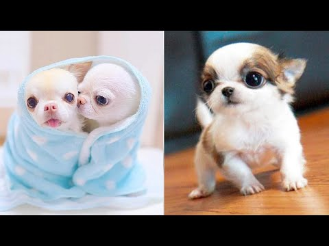 Baby Dogs – Cute and Funny Dog Videos Compilation #37 | Aww Animals