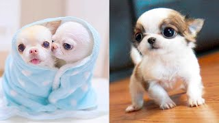 Baby Dogs  Cute and Funny Dog Videos Compilation #37 | Aww Animals