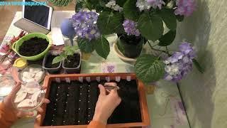 Посев перца на рассаду/ Московская обл./ 12 сортов.#sowingpepper #seeds #seedlings