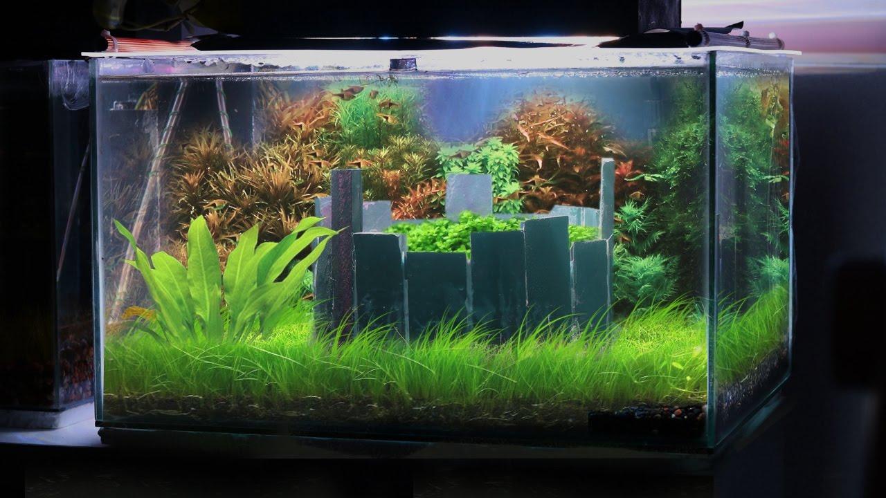 planted aquarium setup guide pdf