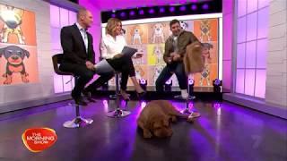 Ralphie the Dogue de Bordeaux on Channel 7