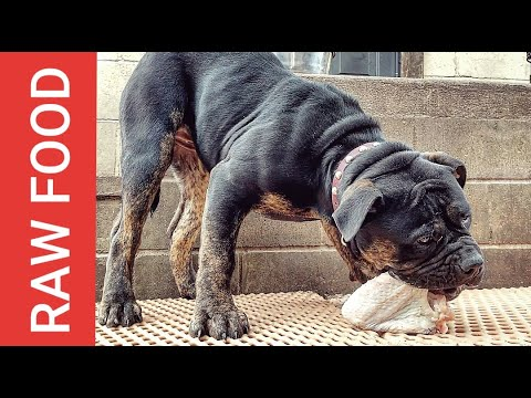 Feeding RAW Food to a Puppy - FOOD AGGRESSION UPDATE (Magi)
