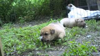 Puppies rescued from under house in south San Antonio