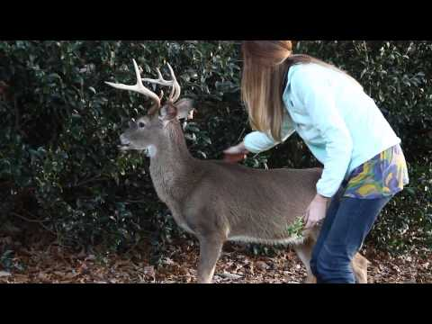 A Girl Approaches and Pets A Wild 7 Point Buck - Amazing!