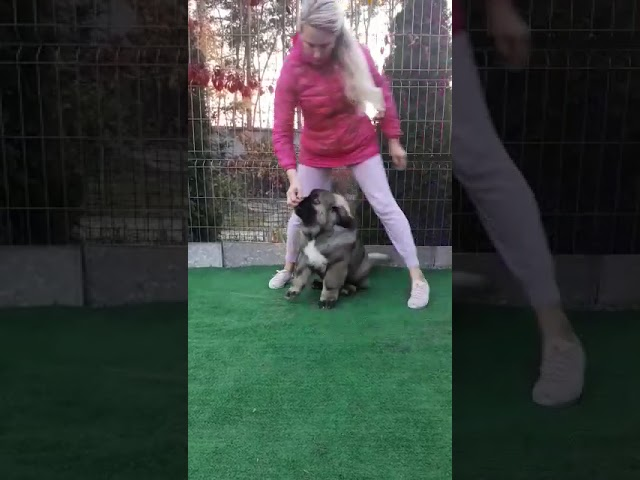 Female # 04 for sale 3.5 months (video 2)