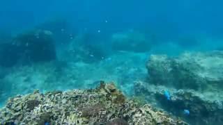 沖縄県糸満市にある大度海岸(ジョン万ビーチ)でシュノーケルをしてき...