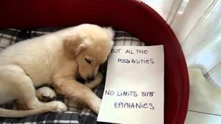 Video American Authors - Best Day Of My Life (dog version) - Pilgrim download MP3, 3GP, MP4, WEBM, AVI, FLV Februari 2018
