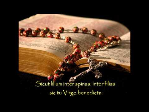 Tota Pulchra Es - Catholic Hymns of Praise
