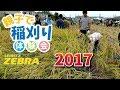 ゼブラ 親子で稲刈り体験会 2017