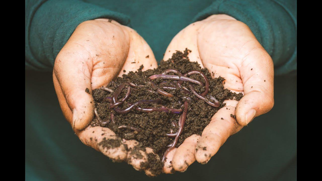 حقيقة خروج الحشرات و الحيوانات من جسم المريض عند الشفاء