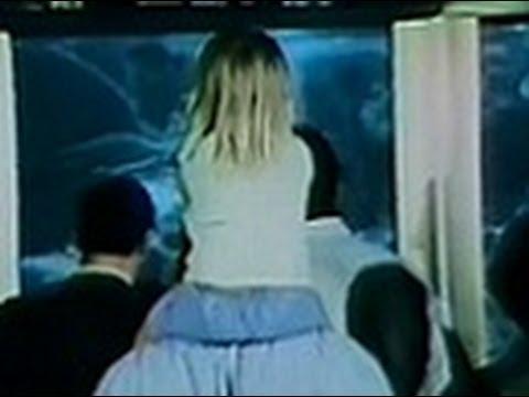 """Shedd Aquarium - """"Caribbean Coral Reef"""" (Commercial, 1973)"""