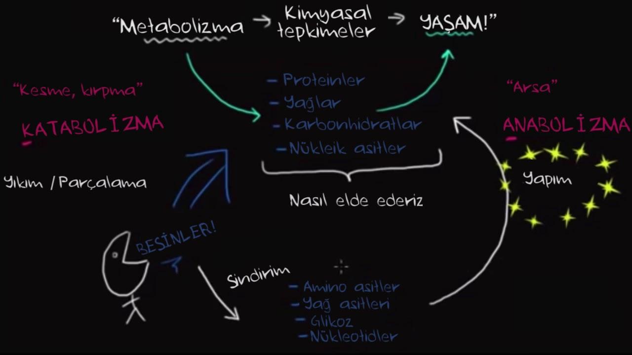 Anabolik katabolik ne demek steroids and heart palpitations