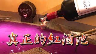 Hay生活篇 - 日本自駕遊 (箱根小涌谷温泉)真正的紅酒池 #3