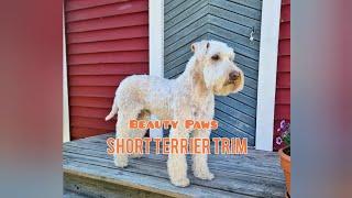 HOW TO DO A SHORT WHEATEN TERRIER TRIM | Terrier grooming tutorial