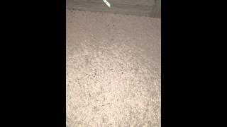 The Crossings at Plainsboro NJ Apt Ant Attack