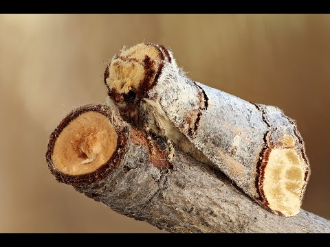 12 Coolest Camouflage Animals and Insects - YouTube