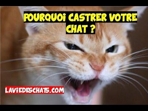 Faire Castrer Votre Chat ?🐱 Pourquoi Et Combien ?