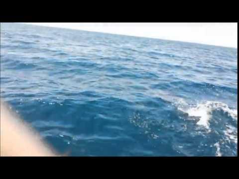 Dolphins Red Sea  Sharma beach Tabuk Saudi Arabia