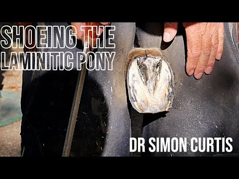 Shoeing A Laminitic Pony - Treating Founder In Ponies