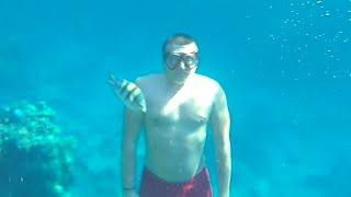 Подводный мир Египта Отдых в Sheraton Sharm Hotel Resort Villas Spa 5 Купаемся в море