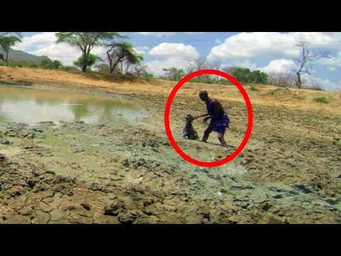 Elephants Fled From A Strange Noise In A Mudhole  Then Rangers Discovered The Creature Responsible