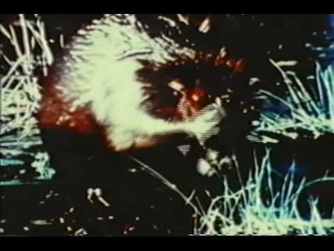 Survival Opening Titles 1986