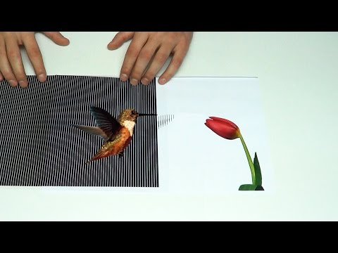 Amazing Animated Optical Illusions