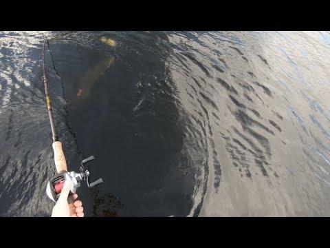 Minnesota Musky Opener On Lake Vermilion (BIG FISH)