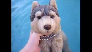 Webkinz Signature Timber Wolf(Bella) Goes Swimming