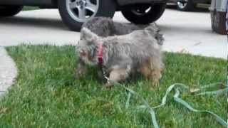 Annie And Nancy - First Time Out Of The Puppy Mill/pound