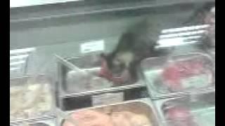 Кот ест мясо прямо в витрине магазина
