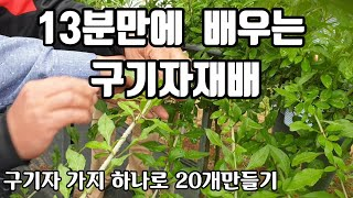 [해피팜스토리 5-3] 13분만에 배우는 구기자재배, …