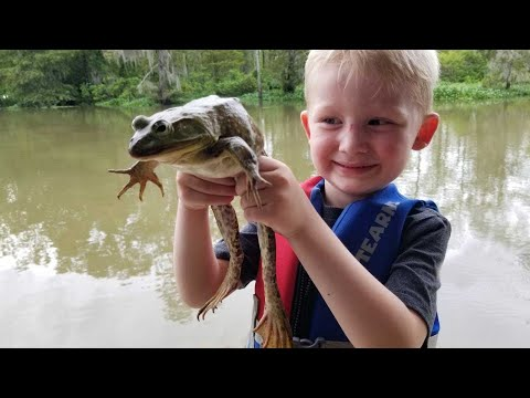 Frog Hunting Catch Clean & Cook! - Frog hunt of a lifetime! |
