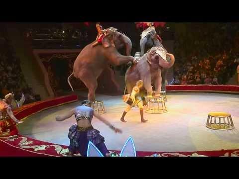 Цирк, выступление слонов