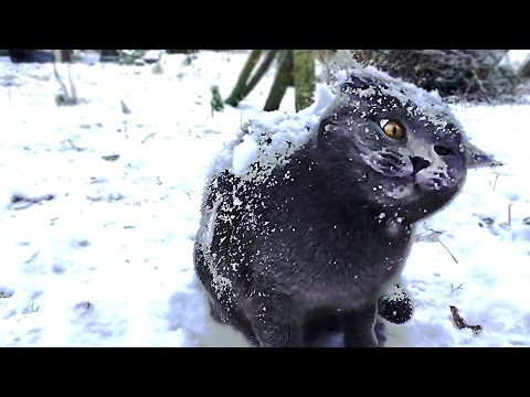 Cats in snow compilation